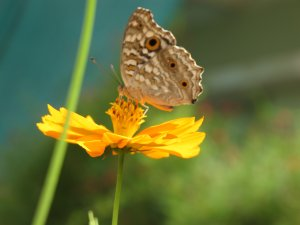An up close encounter with the butterfly